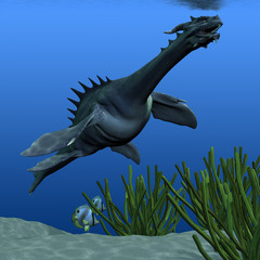 Sea Dragon 02