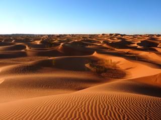 Foto op Aluminium Algerije sahara