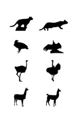 Black images and silhouettes of a South America wild animals