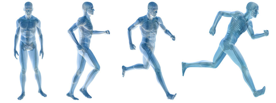 High resolution conceptual man anatomy