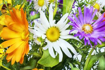 Flower expression