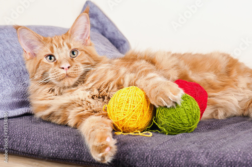 how to remove pet urine from mattress