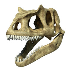 Photorealistic 3 D rendering of an Allosaurus skull.