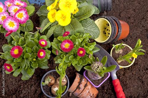 gartenarbeit fr hlingsblumen einpflanzen stockfotos und lizenzfreie bilder auf. Black Bedroom Furniture Sets. Home Design Ideas