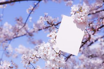 letter[cherry_blossom]_010