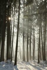 Keuken foto achterwand Bos in mist Sunlight enters the coniferous forest on a foggy morning