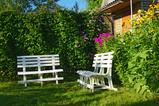 White benches in a secluded corner of lush green garden