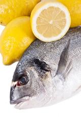 pescado crudo fresco con fondo blanco