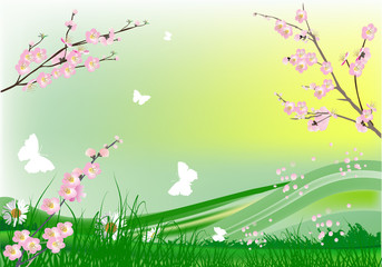 cherry tree flowers and green spring landscape