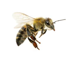 Printed kitchen splashbacks Bee bee