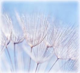 Fotorolgordijn Paardebloemen en water Abstract dandelion flower background