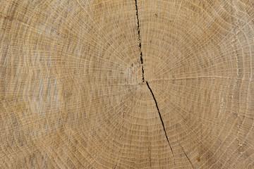 Hartes Holz