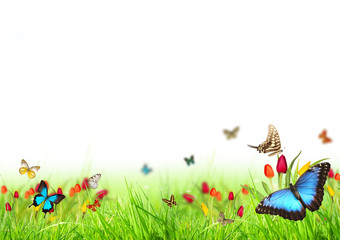 Beautiful spring meadow with butterflies on white background