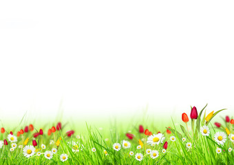 Beautiful spring meadow isolated on white background