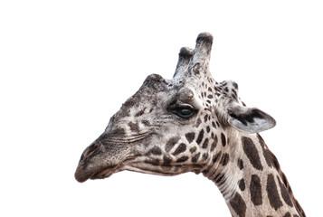 Giraffenporträt