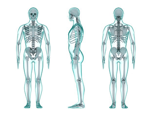 three view render of the human body with transparent skin