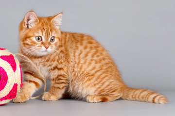 Red kitten with a ball on grey background