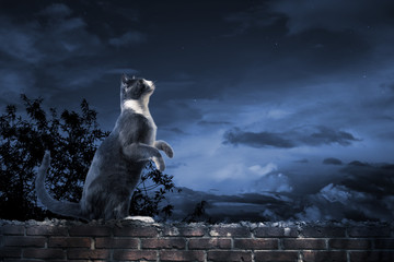 alley cat standing in the moonlight