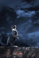alley cat standing in the moonlight