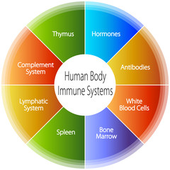 Human Body Immune Systems Chart