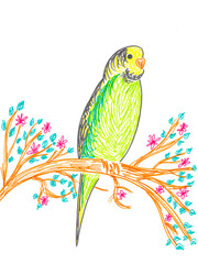 Cute budgerigar on tree branch, hand drawing illustration.