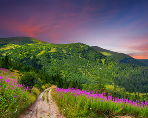 Wall Mural - Beautiful summer landscape in the mountains with pink flowers. S