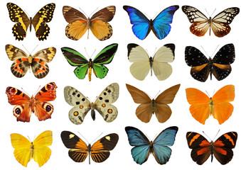planche de papillons Wall mural