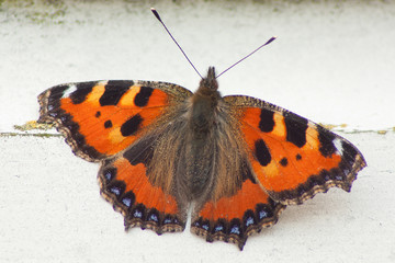 A close-up of a butterfly on wood