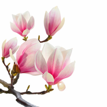 plant on white magnolia