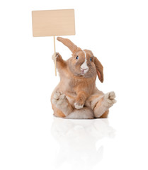 little bunny with sign