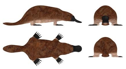 3d render of platypus animal