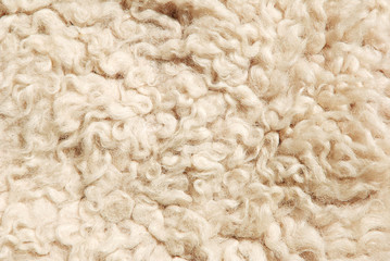 sheep fur texture.