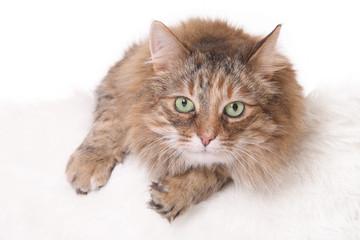 green-eyed cat