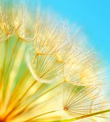 Fotorolgordijn Paardebloemen en water Soft dandelion flowers