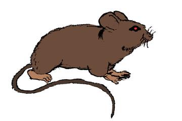 Rat Illustration