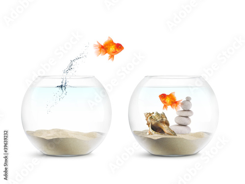 Poisson rouge aquarium amour photo libre de droits for Bocal a poisson prix