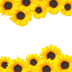 Cheery sunflower background design with copy space