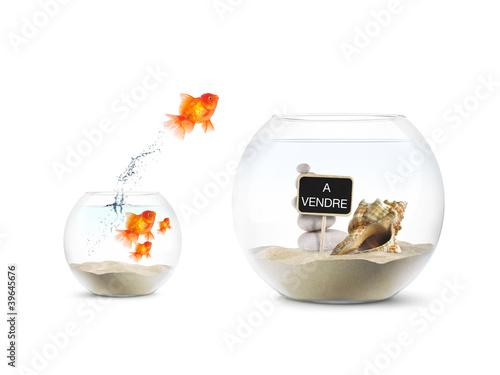 Poisson rouge aquarium achat immobilier photo libre for Poisson rouge achat