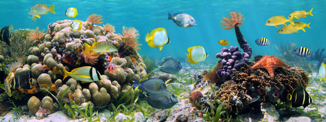 Spoed Fotobehang Koraalriffen Underwater panorama in a coral reef with colorful tropical fish and marine life