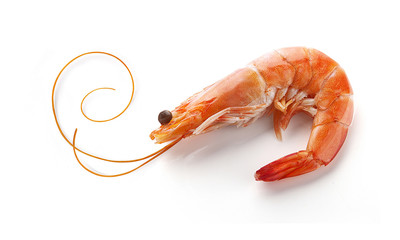 Acrylic Prints Seafoods Shrimp