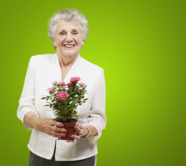 senior woman holding a flower pot against a green background