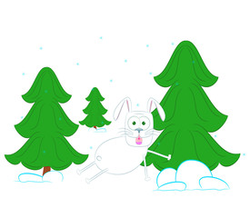 rabbit in a pine forest