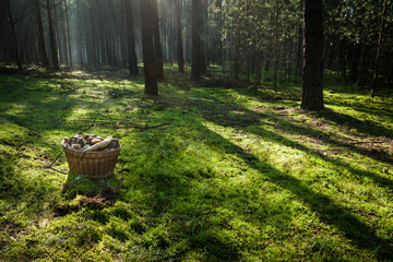 Basket with mushrooms in the forest