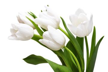 Fototapeta White tulips obraz