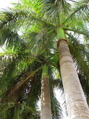 close up shot of a high palm tree