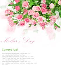 Pink roses postcard design