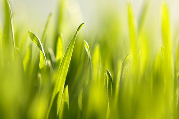 The background of fresh green grass