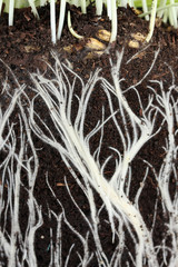 background of roots in the land
