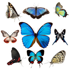 Exotic butterflies collection isolated on white