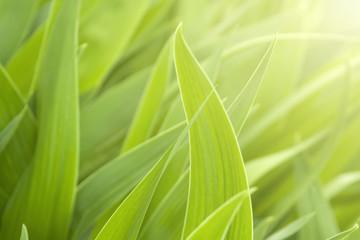 Green grass and beauty light